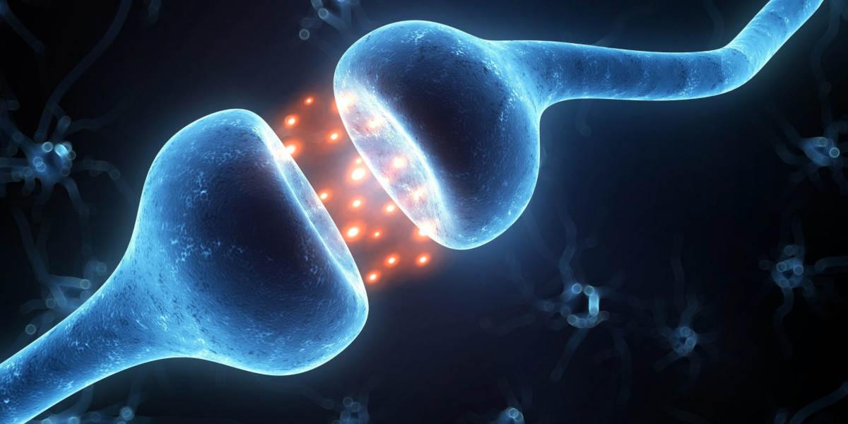 Il magnesio aiuta l'apprendimento e le funzioni cerebrali - illustrazione di una sinapsi nel cervello